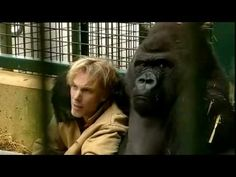Gorilla Gorilla - Damian Aspinall & Kifu at Howletts Wild Animal Park, Kent Pet Dogs, Dog Cat, Gorilla Gorilla, Wild Animal Park, Life Hurts, Father John, Animals Beautiful, Wildlife, Youtube