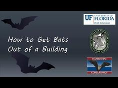 How to Get Bats out of a Building - YouTube