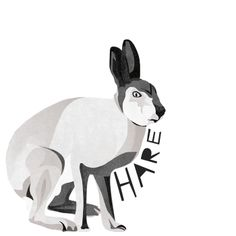 H is for Hare #animalart