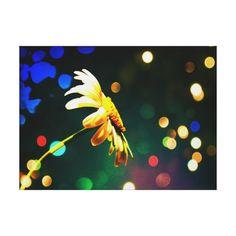 Shasta Daisy Sparkle Wrapped Canvas