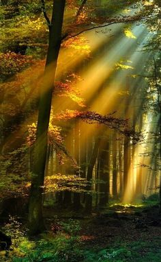 "Color/Texture within photography. The light is beaming through the trees. I like that element. ""i love this photo!"""