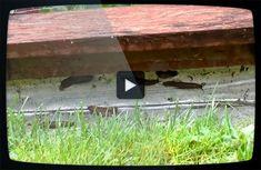 Skydd mot sniglar på pallkragar