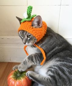 Pumpkin cat hat, Pumpkin hat, hat for cats and small dogs, cat accessories, flower hat for cats - crochet ideas - Katzen Pumpkin Hat, Crochet Pumpkin, Cat Dresses, Cat Accessories, Crochet Accessories, Crochet Animals, Crochet Hats For Cats, Cat Crochet, Flower Hats