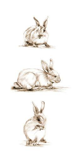 Art Pencil Sketch Rabbit Art Rabbit Sketch Bunny by cmqstudio