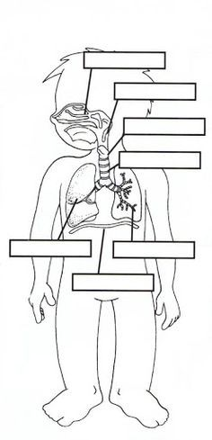 Digestive System: Label, Movie, Quiz http://kidshealth.org