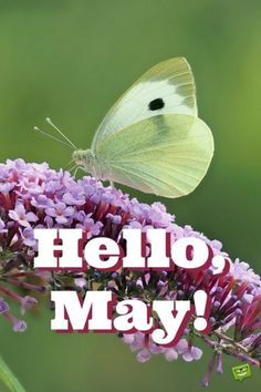 """birthday month meme Our floral collection of May cards is made to be shared to spread the joy that this month brings. We say a colorful big """"Hello, May!"""" just as temperatures rise. May Month Quotes, Hello May Quotes, Birthday Quotes For Me, Happy Birthday Me, Its My Birthday Month, Spring Quotes, Hello November, December, New Month"""
