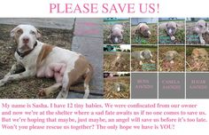 Urgent Miami Animal Control  - Sasha and Her Babies - Please Adopt - Foster - Pledge - Share