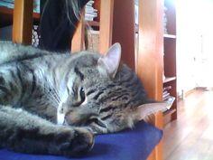 My cat Čiko  fashion cat .:-) :-D