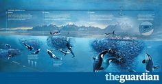 A century of National Geographic infographics – in pictures http://www.theguardian.com/artanddesign/gallery/2017/mar/01/national-geographic-infographics-taschen?utm_campaign=crowdfire&utm_content=crowdfire&utm_medium=social&utm_source=pinterest