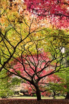 """""""Even if something is left undone, everyone must take time to sit still and watch the leaves turn.""""~Elizabeth Lawrence"""
