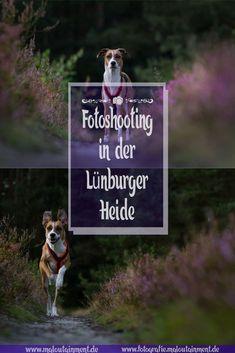 Modelsuche – Portfolioerweiterung – Einzelshooting: Heide – Maloutainment