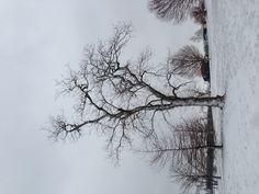 Deep winter..