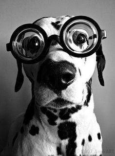 its my doggie!!!!!!!!!!!!!!!!!!!!!!!!!!!!!!!!!!!!!!!!!!!!!!!!!!!!!!!!!!!!!!!!!!!!!!!!!!!!!!!!!!!!!!!!!!!!!