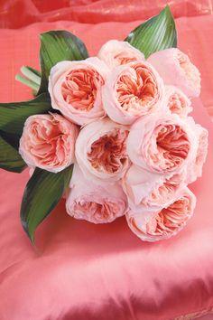 Juliet #rosaprima #roses #weddings #bouquets #arrangements #brides