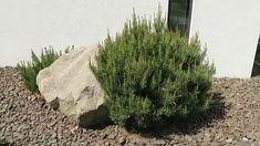 Elő és oldalkert kertépítés ötletek Herbs, Plants, Facebook, Modern, Youtube, Trendy Tree, Herb, Plant, Youtubers