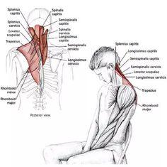 15 Estiramientos para aliviar la tensión en el cuello y los hombros - Mundoamores Stretching, Reiki, Pilates, Health Fitness, Gym, Workout, Yoga, Physical Therapy, Medicine