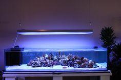 Rimless Aquarium Club - Page 37 - Reef Central Online Community Saltwater Fish Tanks, Saltwater Aquarium, Freshwater Aquarium, Marine Fish Tanks, Marine Tank, Aquarium Sump, Aquarium Fish Tank, Coral Reef Aquarium, Marine Aquarium