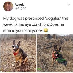 nice Animal Edition Memes That Are Just Up to The Mark Pictures) Fallout Funny, Fallout Art, Fallout New Vegas, Dogmeat Fallout, Fallout Comics, Gamer Humor, Gaming Memes, Ems Humor, Funny Cute