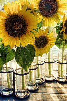 Love Sunflowers! #myfavouriteflower. X