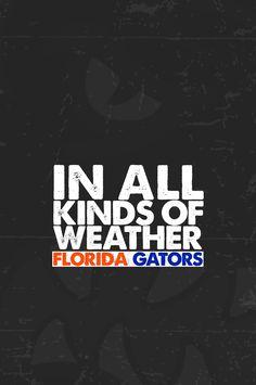 florida gators football iphone wallpaper - Google Search