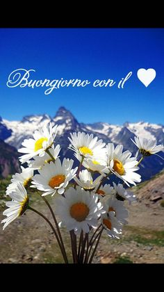 Buongiorno a tutti – BuongiornoATe. Good Morning Messages, Good Morning Good Night, Pink Wallpaper Backgrounds, Italian Memes, Ocean Photography, Say Hello, Science Nature, Beautiful Flowers, Book Art