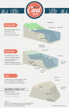 There are several different types of Coral Reefs. Let's have a look.Feel free to share this wherever you'd like! High Res Link: ...