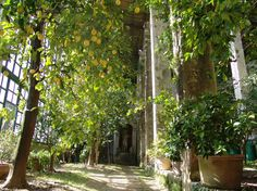 Orangerie Gardasee