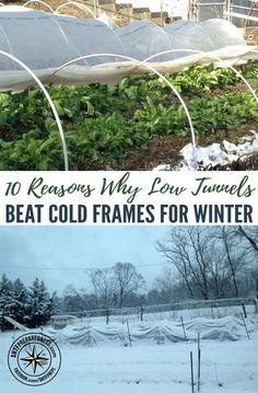 10 Reasons Why Low Tunnels Beat Cold Frames for Winter Gardening — Fresh produce is key to a nutritious diet, but those who grow their own vegetables know how much of a challenge it can be. Whether you're homesteading or prepping, it is a great idea to get your own garden established as soon as possible so that you can learn how to winterize it for maximum production.