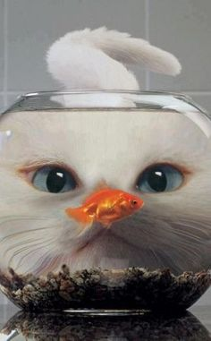 Fish Cat | Cat Lover Gifts at mypeties.com