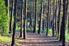 Wareham Forest, easy access to the forest which is great for walking, cycling and bird watching. Wareham, Dorset England. Discover Purbeck