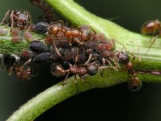 How to Stop Ants From Eating Plants