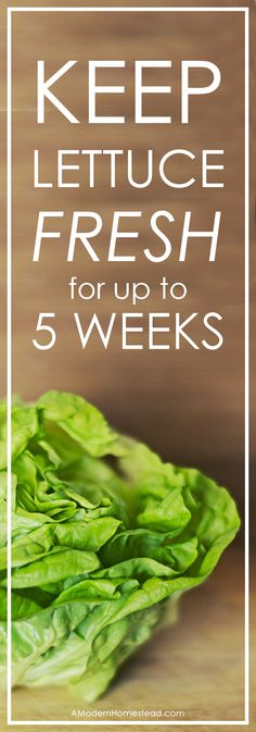 Wasting food is one of the most frustrating things when you're trying to stay on a budget. While there are all sorts of foods we like to eat fresh, lettuce is one that goes bad quickly if you don't know how to store it properly. Find out how we keep our lettuce fresh for up to 5 weeks!