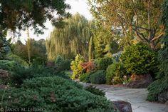 conifers, mixed foliage border, evergreen shrubs at The Oregon Garden Evergreen Garden, Evergreen Shrubs, Trees And Shrubs, Trees To Plant, Sun Garden, Garden Shrubs, Garden Trees, Garden Paths, Japenese Garden