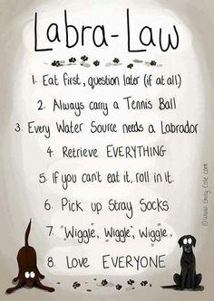 Labrador Retriever Law