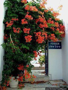 A colourful entrance in Parikia