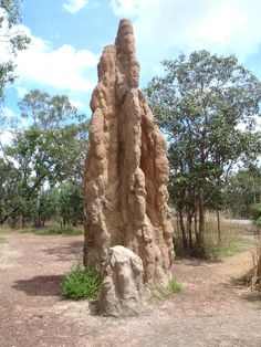 Termite Mounds - Darwin, Australia. There's so many of these. Such a mystery to me lol