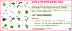 Aiuola per erbe aromatiche