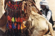 Camel saddle, Berenike, Eastern Desert, Egypt, photography by Zbigniew Kosc © 1998