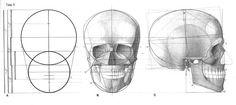 AnatoRef   Struttura Uomo Manuale di Anatomia Artistica Vol....