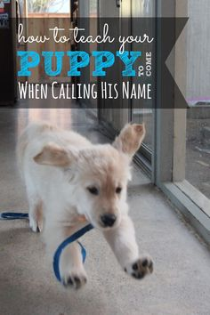 Do you know how to teach your puppy to come when calling his name