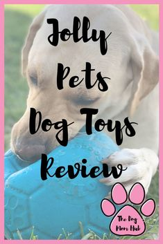 Want toys your dog cannot break? Check out this review by a dog mom of 3 dogs who love chewing on everything. #dogtoys #dogmom #dogmomlife #dogs #dogtoyreview #dogtips Dog Accesories, Dog Games, Girl And Dog, Dog Mom, Pet Care, Pet Dogs, Your Dog, Pup, Dog Products