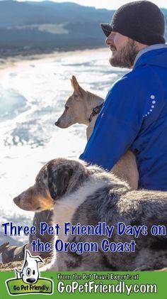 Pet Friendly Road Trip Planner Makes Travel More Fun | Dog Friendly