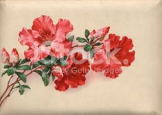 vintage flower royalty-free stock photo