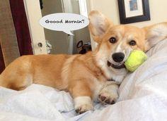 Tennis ball. Why?
