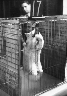 """LIFE Goes to a Cat Show, 1952 