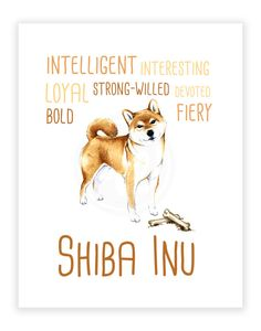 Hey, I found this really awesome Etsy listing at https://www.etsy.com/listing/222415316/shiba-inu-art-print-11x14-shiba-inu-art
