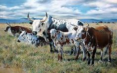 The Big Mondplaas Nguni Oil, – Revisited Farm Pictures, Cow Painting, Cow Art, Western Art, Cattle, Farm Animals, Pet Birds, Ranger, Livestock