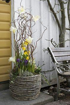 Bellisima, Indoor Plants, Planters, Easter, Patio, Spring, Garden, Flowers, Crafts