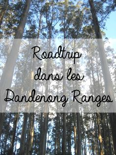 Roadtrip dans le Dandenong Ranges National Park, près de Melbourne, dans le…
