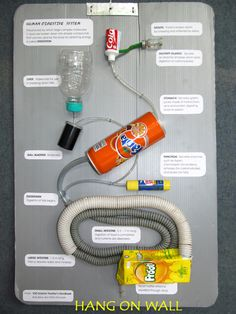 Toys from Trash - Human Digestive System
